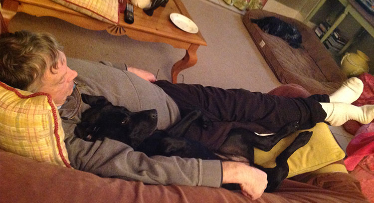 dog sitter resting with a black Labrador